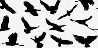 vectors-bird-sillouttes