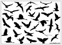 vectors-flying-birds