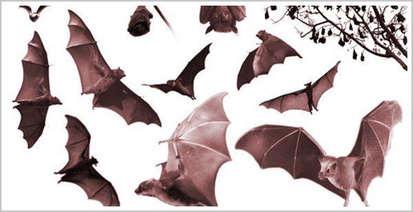 bat-halloween