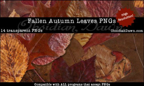 Fallen Autumn Leaves PNGs - Brushes Photos