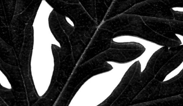 Leaves - Brushes de hojas