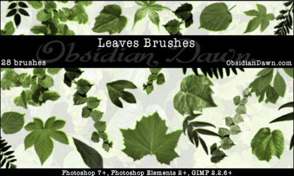 Leaves free Photoshop Brushes